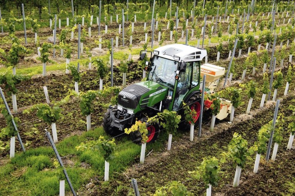 209V vineyard